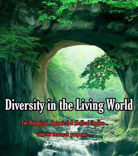 Diversity In The Living World - Concept and Details (NEET And AIPMT )