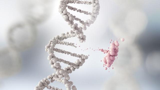 La mutación que podría combatir la obesidad