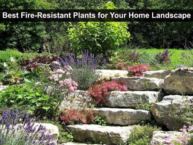 Best Fire Resistant Plants Landscape