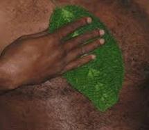 obat herbal asli papua daun gatal