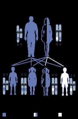 kelainan-genetik-terkait-kromosom-x-resesif