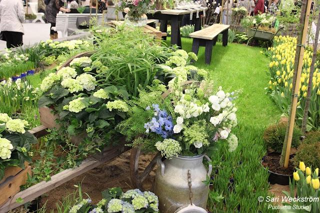 Sarin puutarhat: Unikkoja ja pioneja