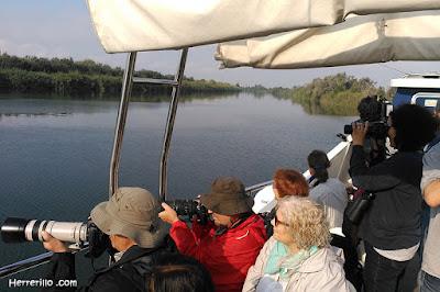 Sortida ornitològica en vaixell pel riu Ebre