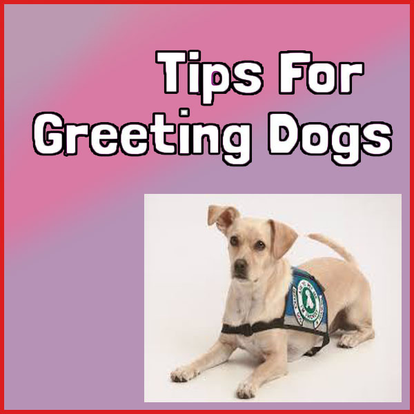 4 Tips to Know When Greeting Dogs
