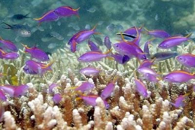 10 Gambar Objek Wisata Taman Lautan Bunaken, Harga Tiket Masuk – Wisata Terpopuler