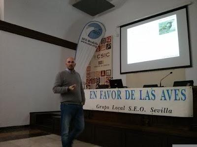 Conferencia: El declive del Gorrión común. Por José L. Aguirre, 13 de Diciembre. Grupo Local SEO-Sevilla.