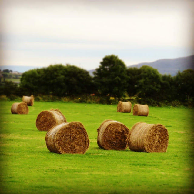 Bales of Hay in County Sligo, Ireland