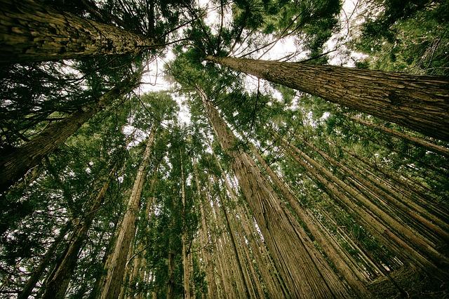 Konsep Lingkungan Hidup