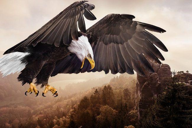 eagle-bird-in-hindi
