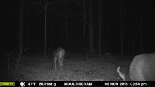 Buck Checking Scrape and Following Doe