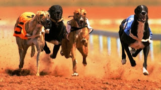 """El presidente del Instituto de Loteria y Casinos, Melitón Eugenio López anunció que """"por expreso mandato de la Gobernadora, sancionaremos a aquellas personas que no cumplen con la Ley 12.449 que prohíbe la realización de carreras de perros cualquiera sea su raza""""."""
