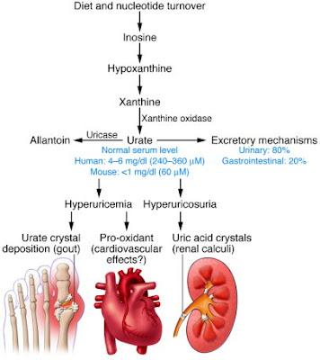 uric acid gout