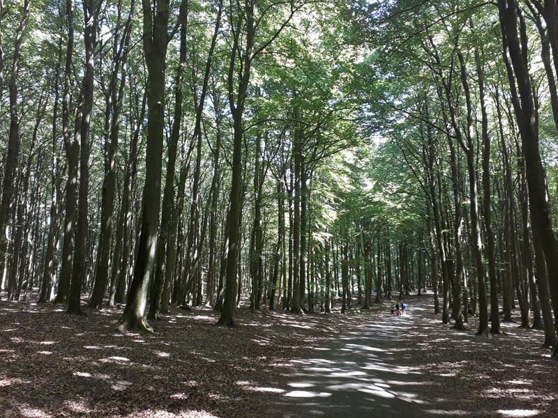 Il Parco Nazionale Jasmund