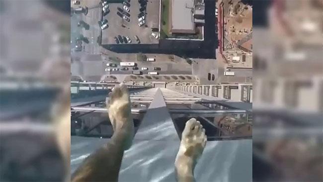Une piscine sur le toit d'un immeuble avec le fond en verre