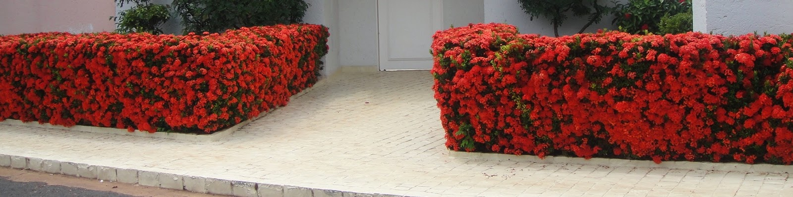 Blog da adriana alvim ixora jardim florido e protegido for Cerca b b
