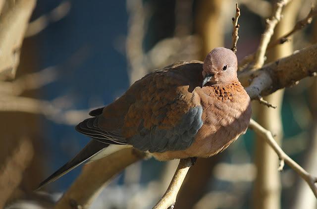 Kuş Fotoğrafları