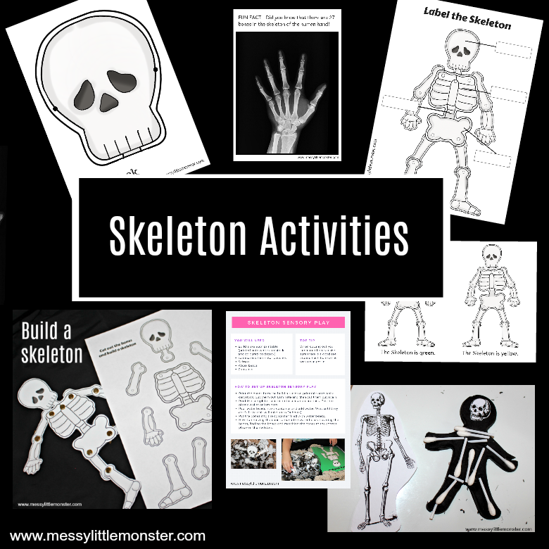 Human Skeleton Activities for Kids