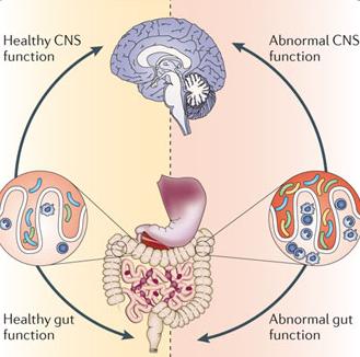 図:脳腸相関