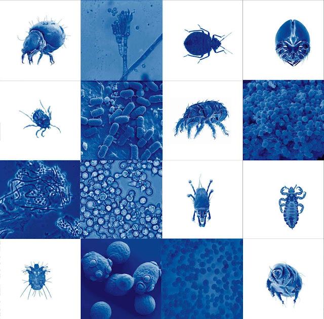 azulejo, ceramica azul, parasitos
