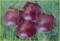 onion seeds ahmedabad