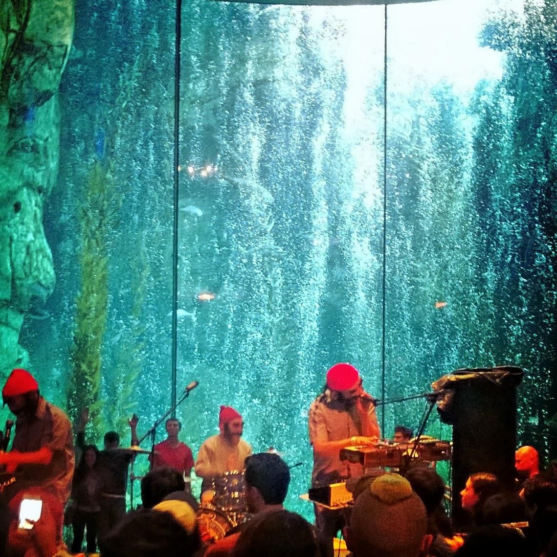Allie Michele Barf The Aquarium Of Pacific