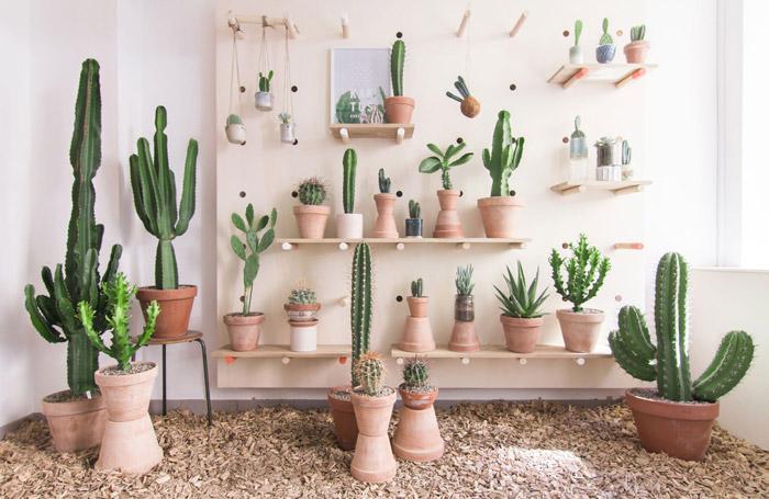 """�te gusta decorar con cactus y suculentas"""" No te pierdas esta concept store"""