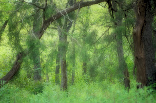 Image of a deep forest, off the beaten path, somewhere in Texas