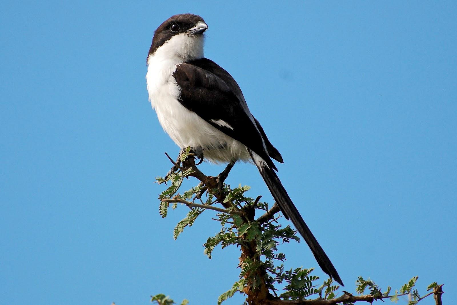 Our Adventures Favourite Kenyan Birds