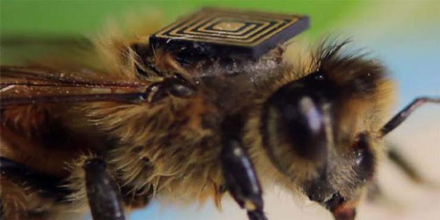 Μέλισσες με «μαύρο κουτί» θα δώσουν στοιχεία για τον αφανισμό τους