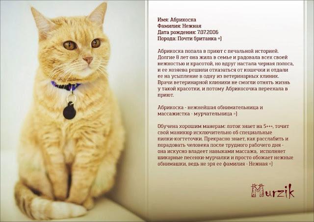 грустные истории котиков