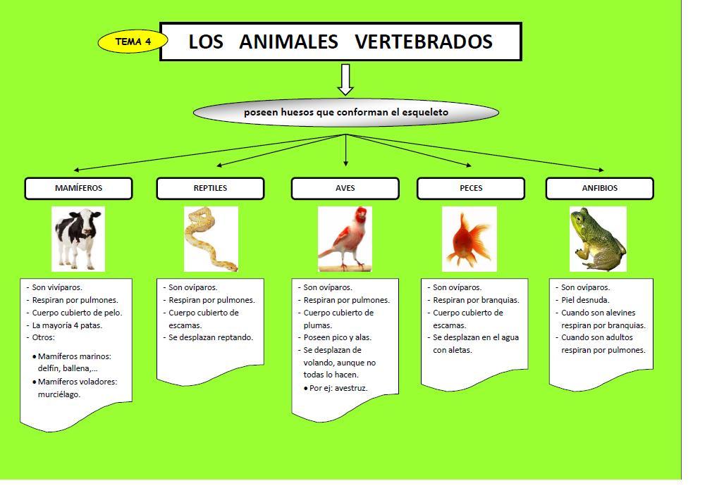 josanprimariaef LOS ANIMALES VERTEBRADOS
