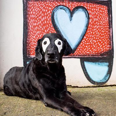 Perro Rowdy que ayudó a los niños con vitiligo fallece.