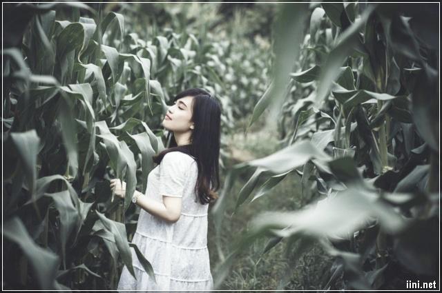 ảnh cô gái đi vào vườn ngô