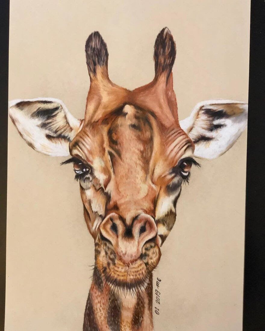 05-Giraffe-Eichenberger-Rodriguez-Colored-Wildlife-Drawings-www-designstack-co
