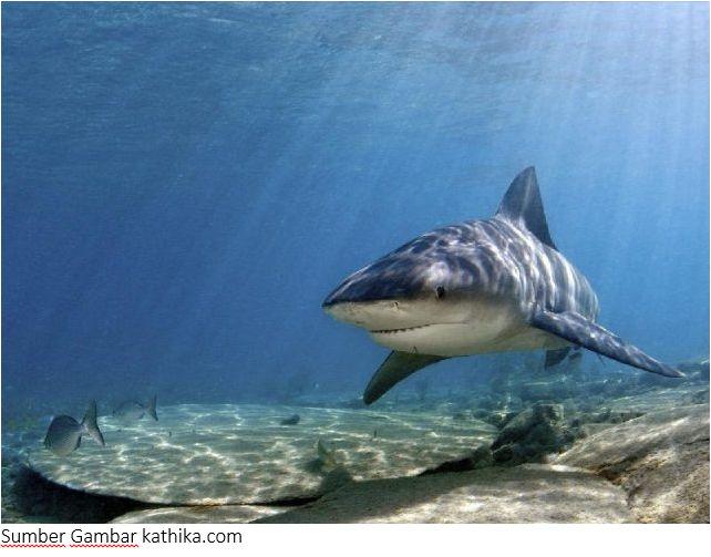 Nama Nama Ikan Laut