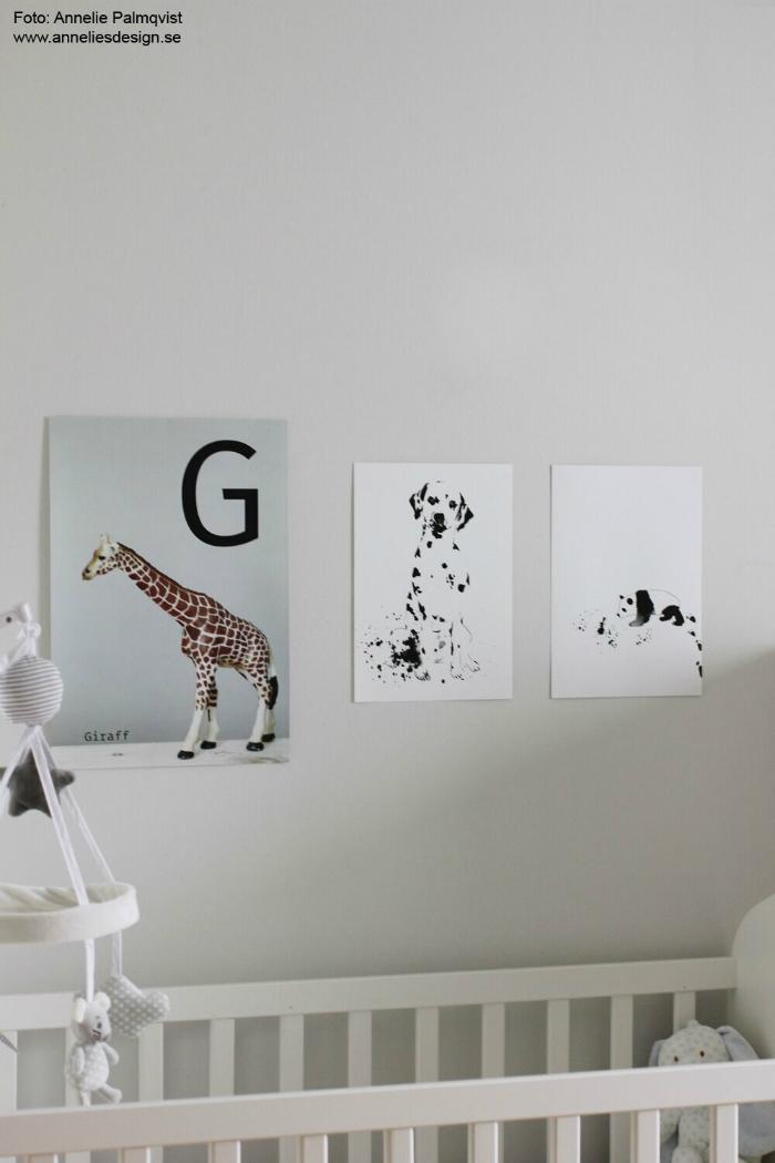annelies design, webbutik, barnrum, tavla, tavlor, panda, pandor, dalmatin, dalmatiner, hund, hundar, giraff, giraffer, dekroation,