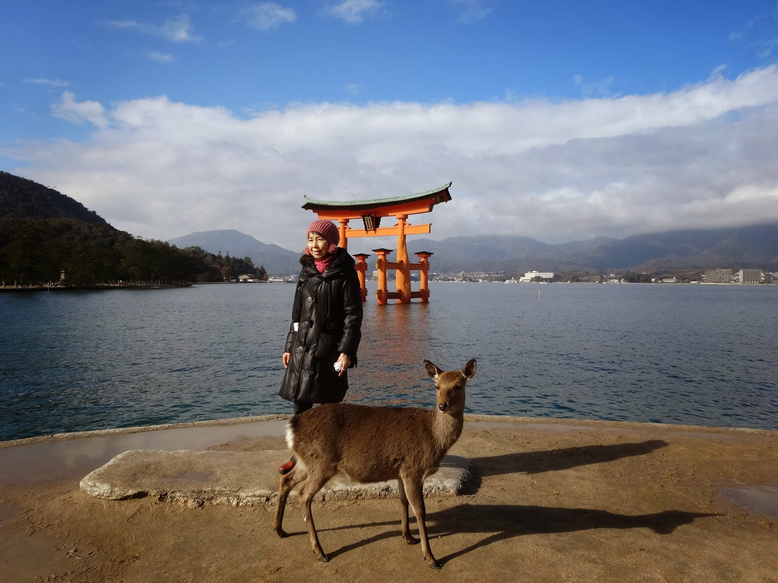 Torii gates on a clear day with a deer