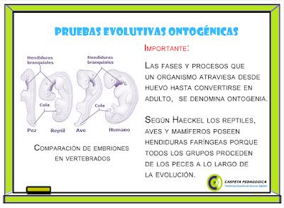 Pruebas Evolutivas Ontogénicas