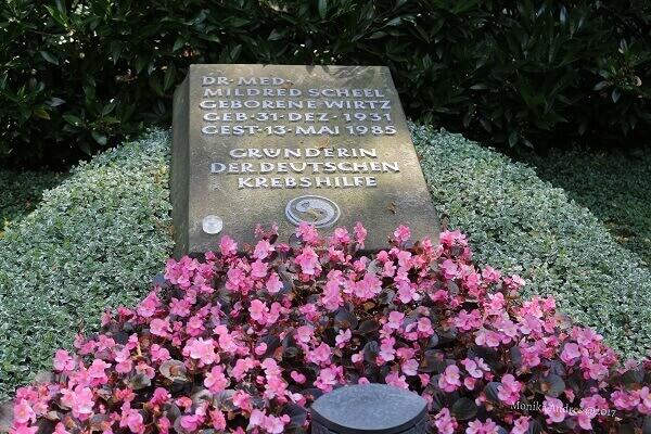 alter Friedhof Bonn Krebshilfe / eigene kleine Welt