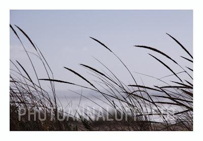 landscape,photo