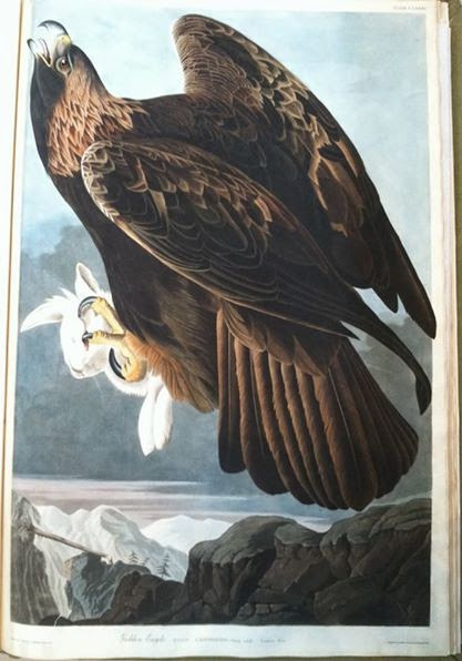 A painted image of a golden eagle with a dead rabbit in its claws.