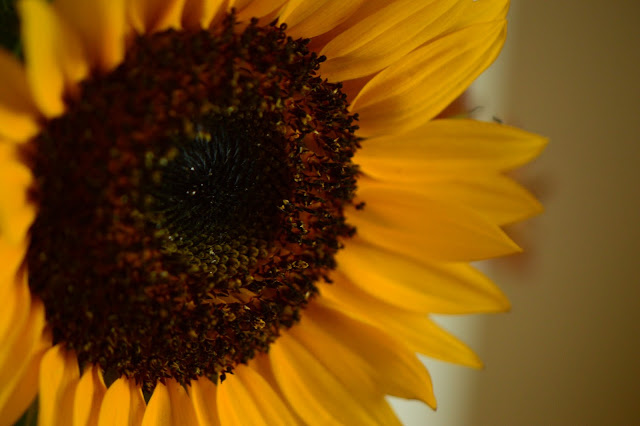 sunflower cutting gold, monday vase meme,
