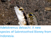 http://sciencythoughts.blogspot.co.uk/2017/05/adelotremus-deloachi-new-species-of.html