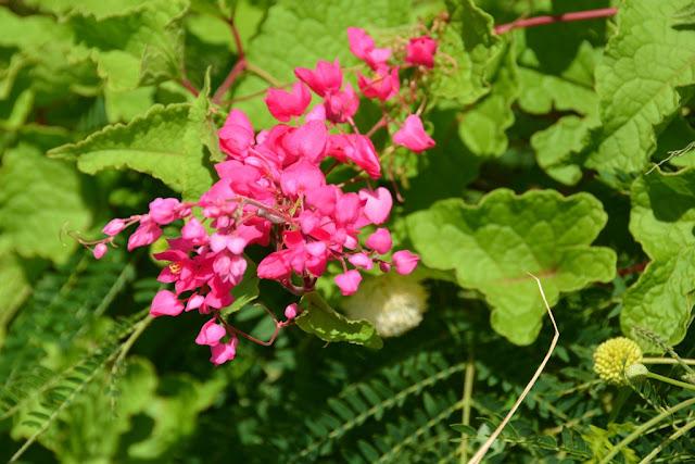 St. George Grenada flowers