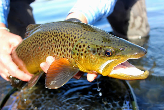 Fly Fishing Reports