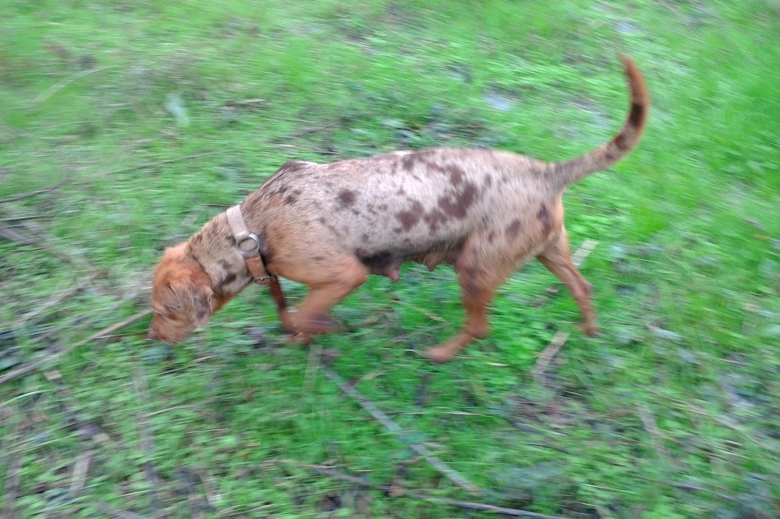 Hunting Dog Training Lafayette La