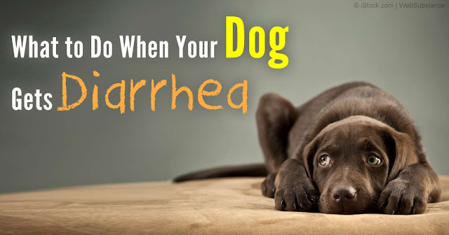 What-to-Do-When-Your-Dog-Gets-Diarrhea