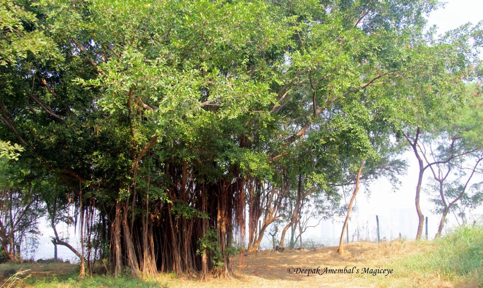 Mahim Nature Park Proposed Methodology