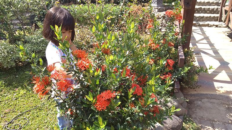 Bunga di Rumah Hobbit Tulungagung