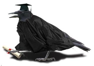 Intelligent corvids